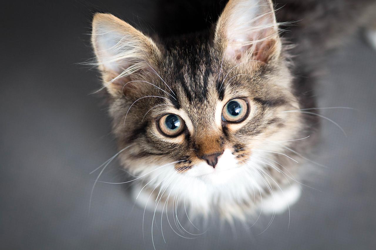マンションで猫を飼育する
